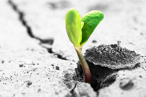 speranza-pianta-terra